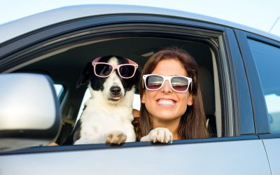 Things to Remember When Looking for Pet-Friendly White Mountain Hotels