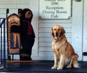 dog friendly hotels in the white mountains