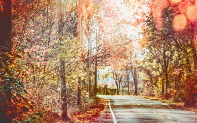 Plan Your White Mountains Fall Foliage Tour