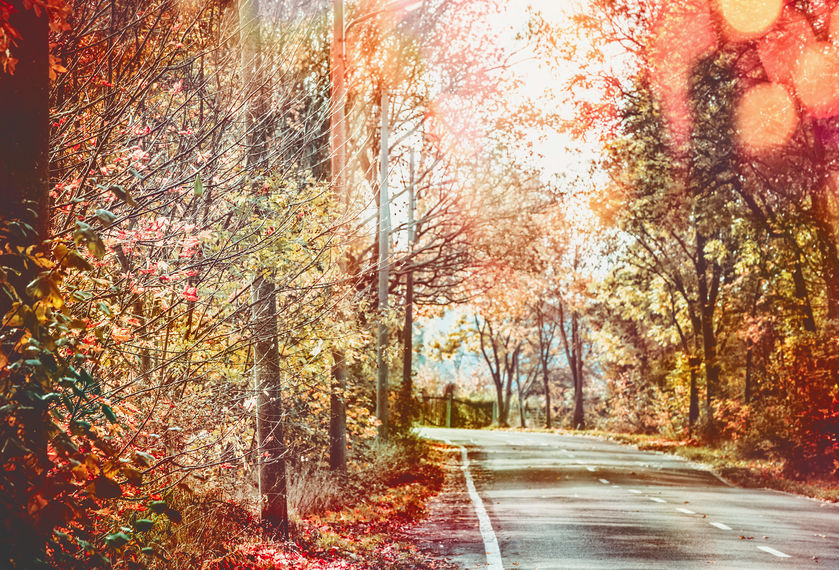 The White Mountains fall foliage is enough draw for you to book your stay with us at the Christmas Farm Inn!