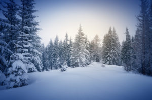 Spend your White Mountains winter in the woods!