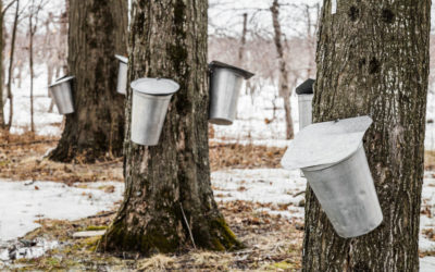 Maple Month in the White Mountains
